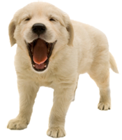 Image of puppy.